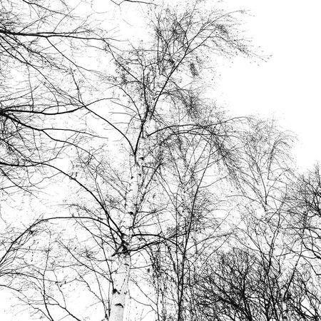 No People Low Angle View Tree Nature Sky Outdoors Close-up Black And White Graphic