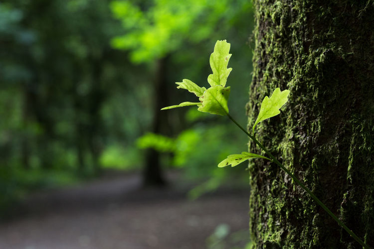 A small growth from a tree caught in dappled light Plant Growth Nature Green Color Focus On Foreground Tree Trunk Beauty In Nature Trunk No People Outdoors Leaf Plant Part Tranquility Tree Day Close-up Selective Focus Sunlight Land Green Leaves