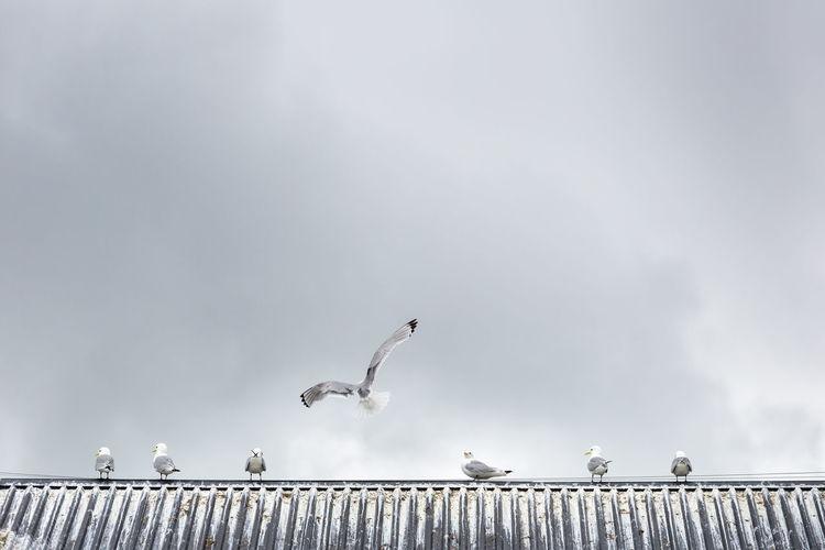 Seagulls on roof against sky