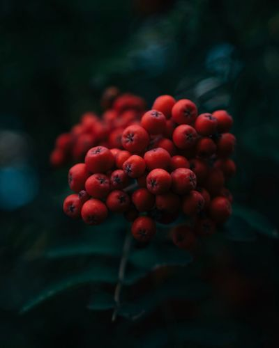 Colors. Moody Nature EyeEm Best Shots EyeEm Nature Lover EyeEm Selects EyeEm Gallery Red Freshness Growth Close-up Fruit Healthy Eating Food Berry Fruit No People Beauty In Nature Selective Focus Vulnerability  Fragility Outdoors Focus On Foreground Nature Plant