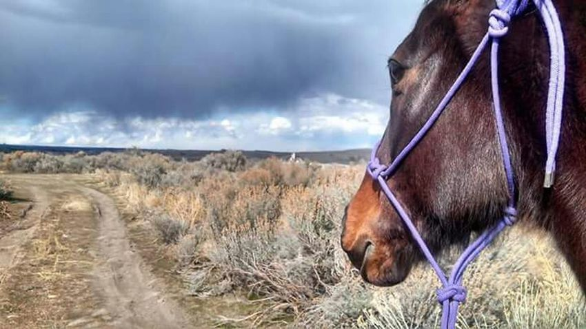Storm on the horizon. Horse Horses Trail Ride Clouds