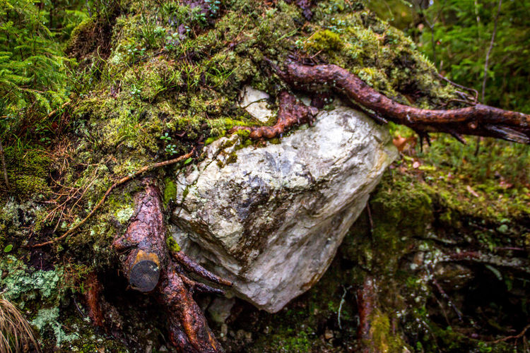 Plant Tree Moss Nature No People Day Close-up Forest Land Tree Trunk Outdoors Focus On Foreground Trunk Growth Fungus Root Textured  Mushroom Tranquility Water WoodLand Rainforest
