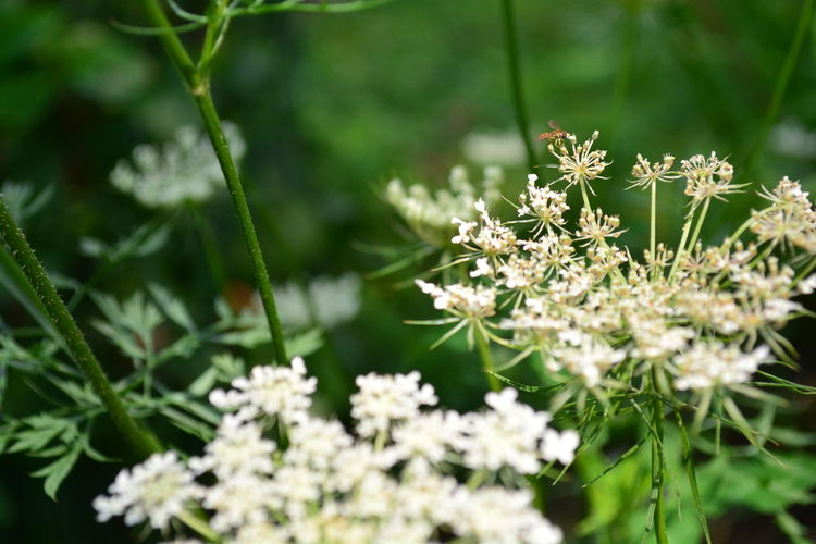 Beauty In Nature Close-up Color Day Floral Flower Flower Head Fragility Freshness Grass Growth Nature No People Outdoors Plant Textured  Tranquility