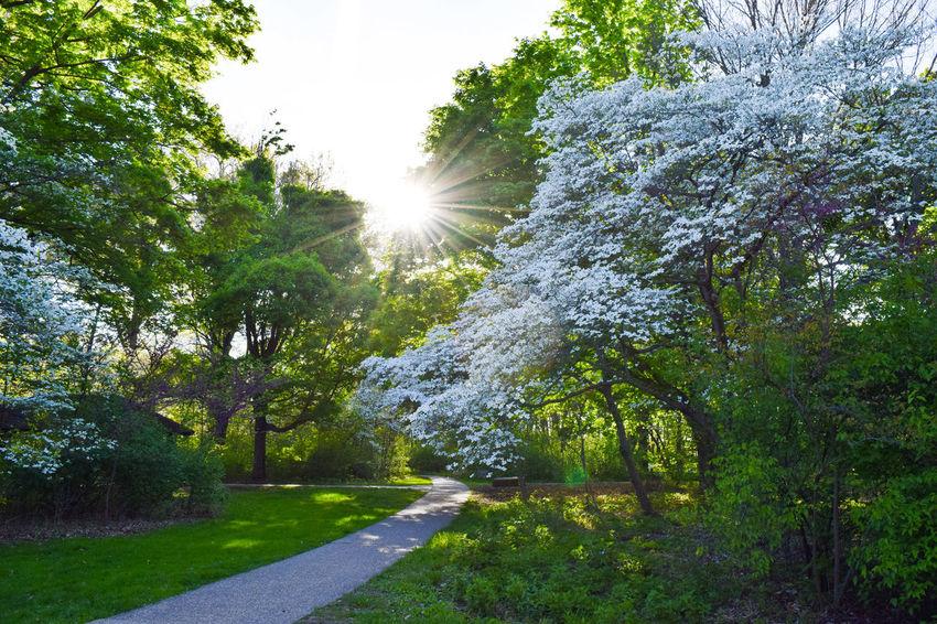 Lincoln Memorial Garden First Eyeem Photo Green Nature Hiking Adventure Trees Springfield Illinois