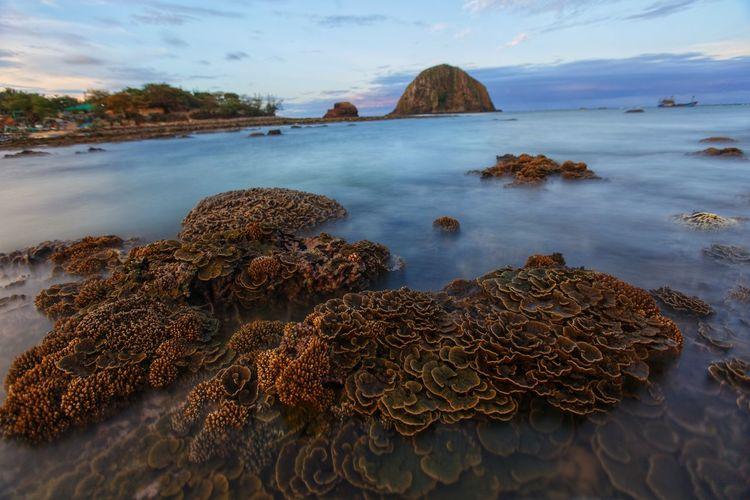 Coral in Yen