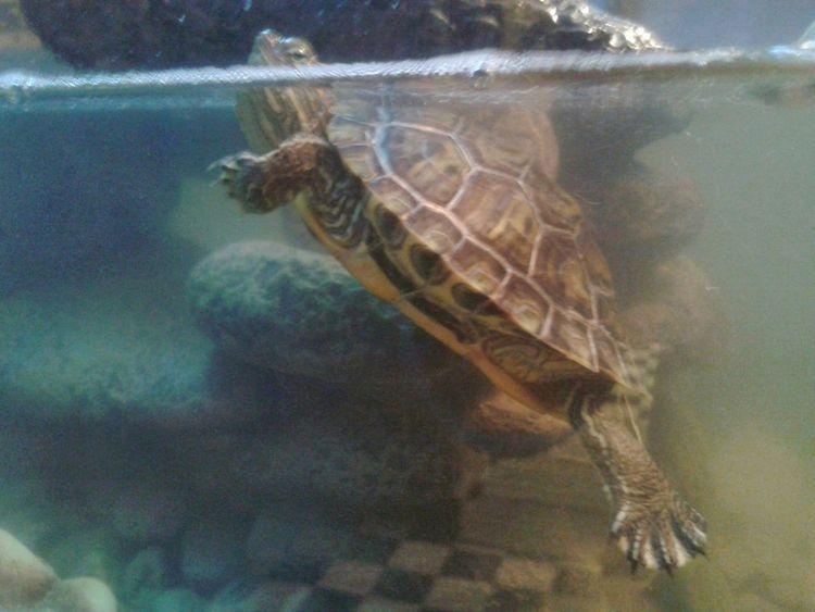 Turtle Aquarium Life Flashback
