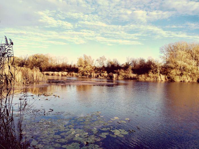 autumn on lake Liman Water Tree Reflection Sky Cloud - Sky Countryside Tranquil Scene Calm Idyllic Non-urban Scene Lakeside