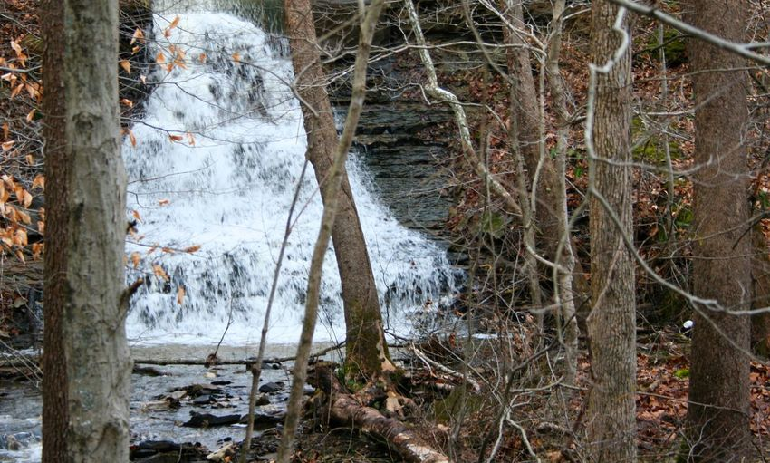 Waterfall, Spillway, Crooked Creek Lake, Indiana Tree Forest Land Plant Nature Water Trunk WoodLand Tree Trunk No People Tranquility Day Environment Outdoors Winter Beauty In Nature Scenics - Nature Non-urban Scene Flowing Water Rainforest Waterfall Waterfalls Creek Spillway