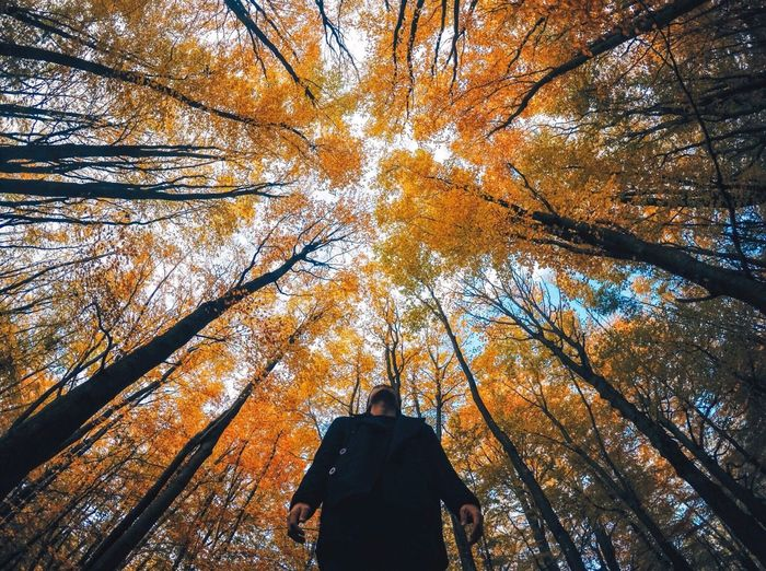 Low angle view of man standing amidst trees in forest during autumn