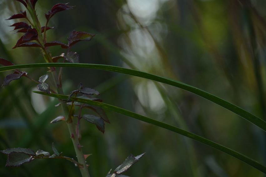 Beauty In Nature Branch Close-up Day Focus On Foreground Fragility Freshness Grass Green Color Growth Leaf Nature No People Outdoors Plant Tree Water