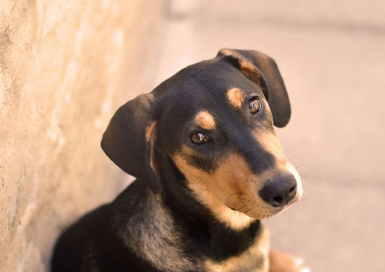 Lola Mission EyeEmNewHere Puppy Love Animal Animal Themes Canine Dog Domestic Animals Eyes Love Animals Pets Portrait Puppy