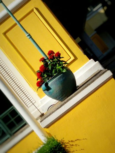 Red Flower : Yellow background, Stilllife, Earthenware, Outdoors, Walking around, Streephography, Getting In Touch .