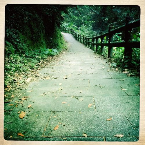 Favorite First Time There Green Leaves Yellow Leaves Railings Downhill In The Mountains Walking In The Woods Part Of The Trail Bat Cave