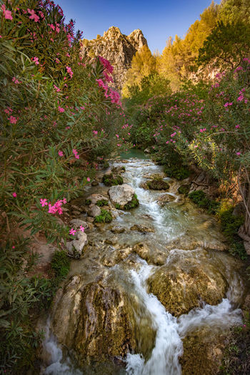 fuentes del algar, callosa de esarriá, Alicante españa Beauty In Nature Day España Flower Flowering Plant Flowing Flowing Water Fuentes Del Algar Growth Land Nature No People Non-urban Scene Outdoors Plant Rock Rock - Object Scenics - Nature Solid Stream - Flowing Water Tranquil Scene Tranquility Tree Water