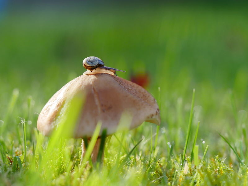 Beauty In Nature Fragility Grass Macro Nature No People Outdoors Snail Mushroom Focus Object Green Animals From My Point Of View Taking Photos Selective Focus Perspective Animal Themes Close Up Close-up Autumn Creative Ladyphotographerofthemonth