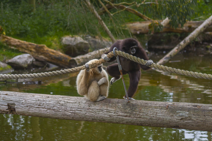 Friends Life Nature Amazing Animals Animal Themes Animal World Animals In The Wild Day Mammal Monkey Nature Nature_collection Outdoors Plaing Plaing Time  Wood Bridge