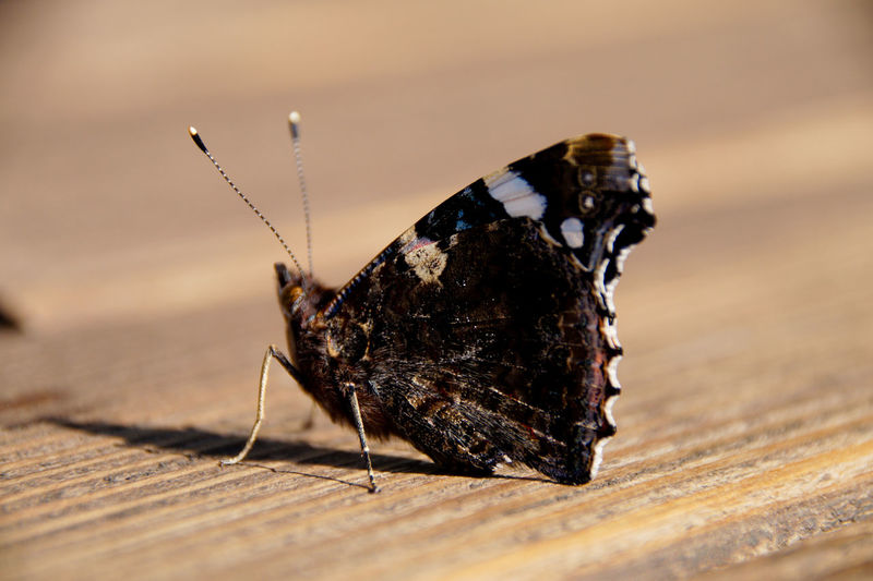 Close-Up Of Butterfly Perching On Wooden Table