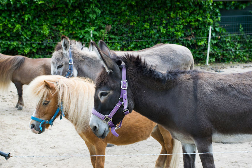 Domestic Animals Outdoors No People Animal Themes Nature Hoorn, Netherlands NIKON D5300 Richard Square Breaker Photography RCW Photography Hoorn The Square Breaker Nature