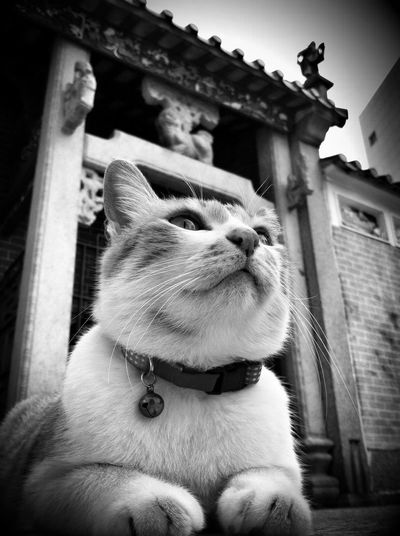 Low angle view of cat