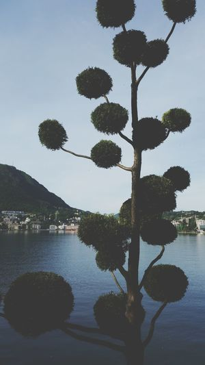 Tree Lugano Sunday Homework Balls Lake Green Park
