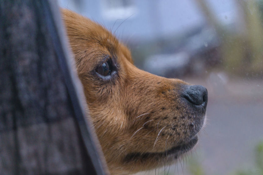 Animal Head  Animal Themes Close-up Day Dog Domestic Animals Focus On Foreground Mammal Nature No People One Animal Outdoors Pets