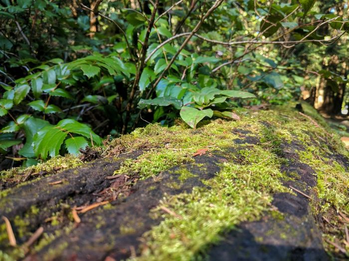 fallen tree Trail Fallen Tree Moss Plants Micro Nature Micro Shot Beach Noon Mount Douglas Park Victoria British Columbia Canada Forest Trees Pixel 2 Pixel 2 Xl