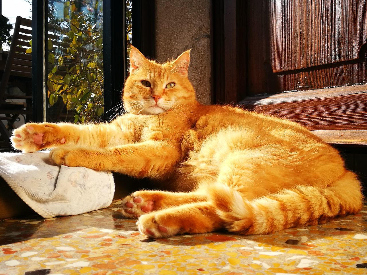 domestic cat, pets, domestic animals, animal themes, feline, cat, mammal, one animal, whisker, sitting, indoors, ginger cat, no people, looking at camera, relaxation, full length, day, portrait