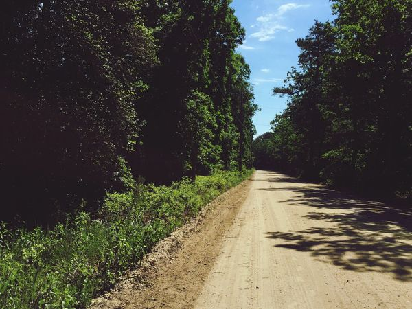Trees And Sky Treescape Pathway Dirt Road Tire Tracks Sunny Day Summertime Summer Clouds And Sky Sunshine Escape Take A Walk Peaceful