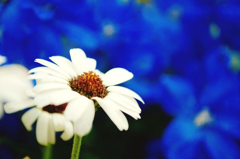 White in blue