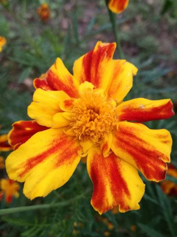 Flower Petal Fragility Single Flower Vibrant Color