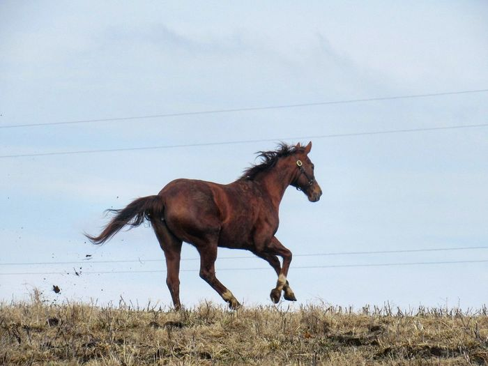 Side View Of Horse Running On Grassy Field Against Sky