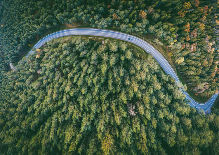 Aerial view of road amidst trees at forest