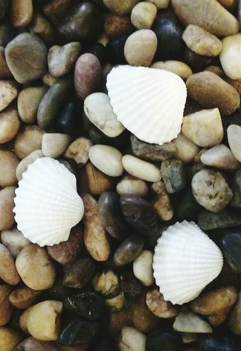 Rocks Seashell Collection White Seashells Variety Colors Taking Photos Close Up Photography Android Photography Simple Photography Backgrounds Pattern, Texture, Shape And Form Eye4photography  Simple Photograph Showcase March The Essence Of Summer