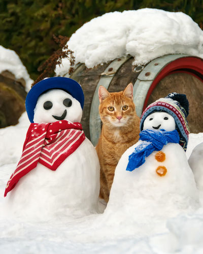 A red tabby cat, European Shorthair, and funny snowmen in a snow covered garden on a cold winter day. FUNNY ANIMALS Funny Humor Shades Of Winter Cat Close-up Cold Cute Cats Domestic Cat European Shorthair Feline Garden Ginger Tabby Humorous Looking At Camera Orange Tabby Outdoors Pets Portrait Red Tabby Cat Snow Snowman Snowy White Color Winter