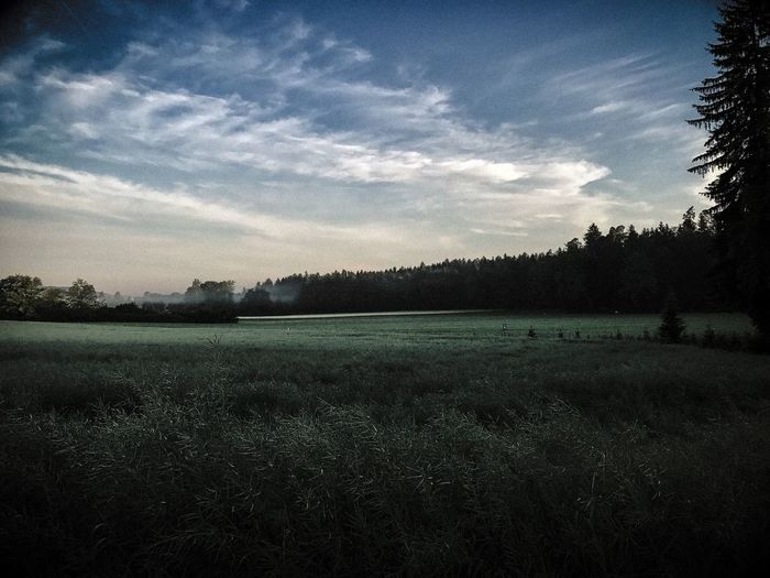 Fields Nature Tranquility Sky Early Morning Farming Landscape Clouds Trees Calm Skies Misty Morning Switzerland Swiss Countryside