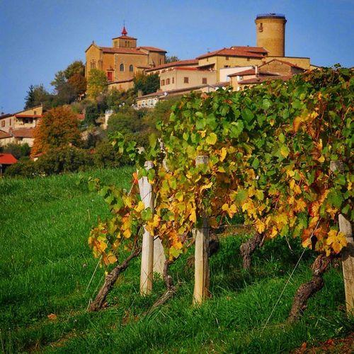 Doucefrance , paisible France , Oingt , Beaujolais , vigne