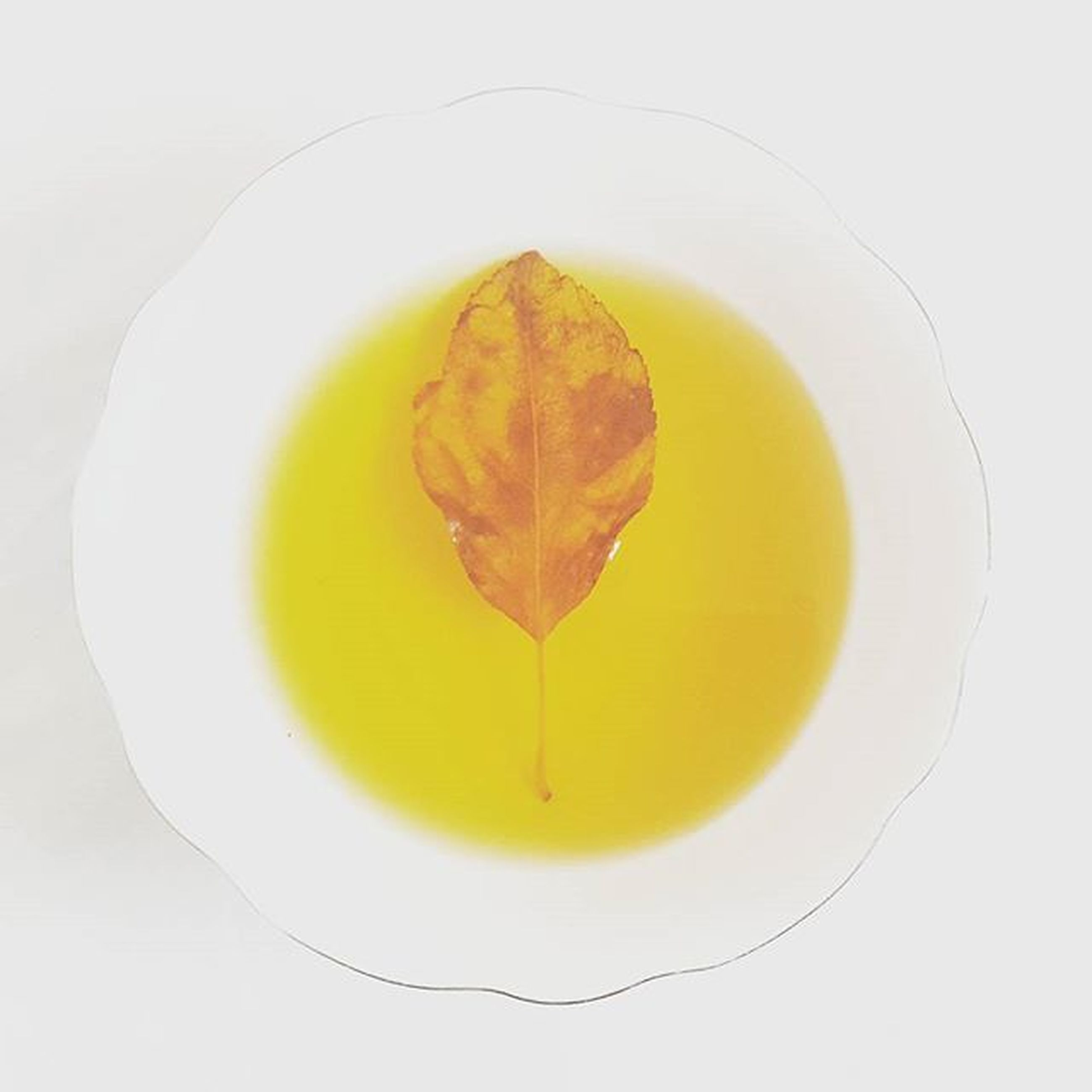 white background, close-up, leaf, studio shot, food and drink, freshness, still life, indoors, high angle view, food, healthy eating, directly above, leaf vein, single object, table, yellow, green color, no people, fruit, water