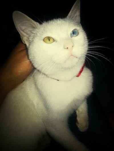 Cat Beautiful Baby Beautiful ♥