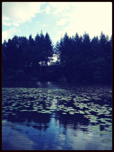 Fishing 🎣 Nature