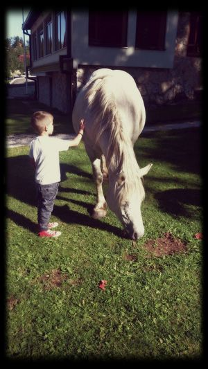 Horse Childhood Rear View Outdoors Green Color Grass Child Childhood Memories
