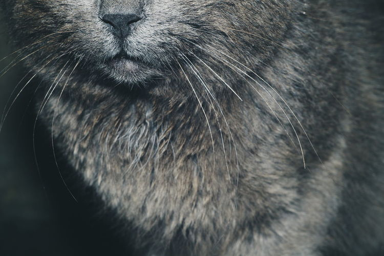 Animal Themes Close-up Mammal Cat Flash Photography A New Perspective On Life