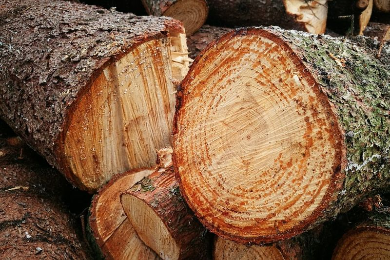 Abundance Brown Close-up Cold Winter ❄⛄ Cross Section Deforestation Environmental Issues Firewood Fossil Fuel Fuel And Power Generation Full Frame Harvesting Large Group Of Objects Log Lumber Industry Lumberjack Medium Group Of Objects No People Outdoors Strain Timber Tree Trunk Wood Wood - Material WoodLand