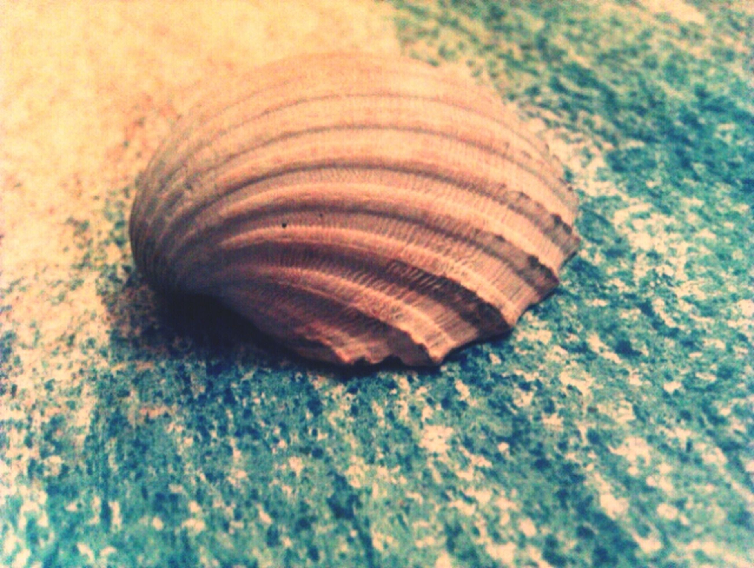 close-up, one animal, animal shell, animal themes, wildlife, animals in the wild, natural pattern, seashell, shell, pattern, single object, nature, selective focus, high angle view, snail, no people, focus on foreground, textured, outdoors, day