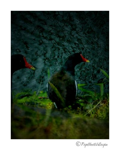 Animal Themes Outdoor Photography Animal Wildlife Poladesiero Filters