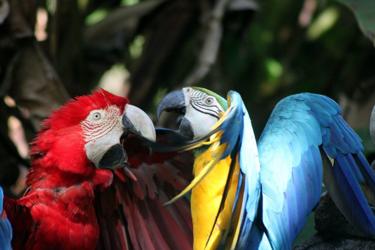 Multi colored parrots against trees in forest