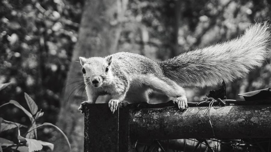 Shots Animal Themes One Animal Mammal Animals In The Wild Focus On Foreground Nature Animal Wildlife Outdoors Nature Squirrels