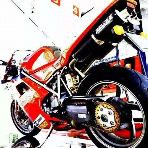Motorcycle Ducati Ducati Motorcycle Ducatiracing Ducatista Ducati Tambulini Tambulini Ducati996 996 Super Bike Sbk Racer Racing