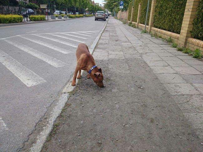 Pszczyna Eye Em Here ! Dogs Dogslife A Dogs Life Dog❤ Homeless Dogs
