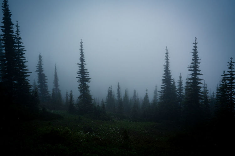 foggy forest,