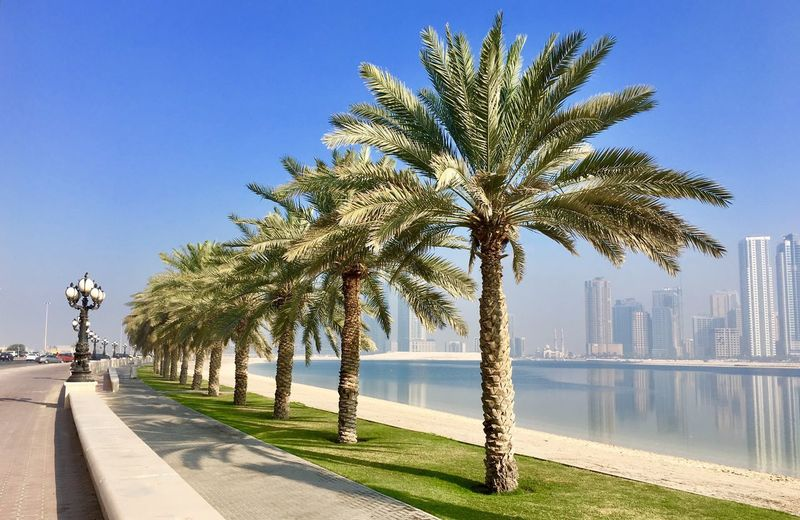Palm tree lined Corniche in Sharjah , UAE Palm Tree Tree Water Clear Sky Day Outdoors Architecture Blue Sea Sky City Built Structure